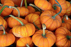 Cute little pumpkins at market Royalty Free Stock Images