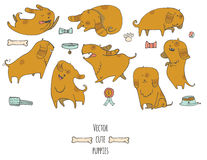 Cute little puppies set in various poses jumping, sleeping, running, sitting, Royalty Free Stock Photos