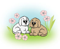 Cute little Puppies Stock Images