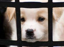 Cute little puppy behide the fence Royalty Free Stock Photos