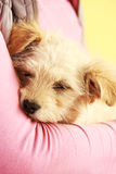 Cute little puppy Stock Images
