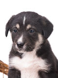 Cute little puppy. With sad eyes isolated over white background stock photography