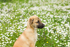 Cute Little Puppy Spring Enjoying Stock Images
