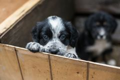 Cute Little puppy in a wooden box is asking to be adopted with hope. Homeless dog.  royalty free stock images