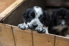 Cute Little puppy in a wooden box is asking to be adopted with hope. Homeless dog.  stock images