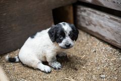 Cute Little puppy in a wooden box is asking to be adopted with hope. Homeless dog.  royalty free stock photos