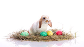 Cute little rabbit. Cute Easter bunny with easter eggs Stock Image