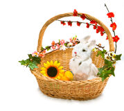 Cute little rabbit in basket Royalty Free Stock Photos