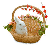 Cute little rabbit in basket. With flowers Royalty Free Stock Photography