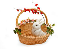 Cute little rabbit in basket. With flowers Stock Image
