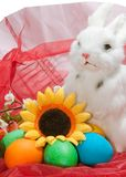 Cute little rabbit in basket Stock Photo