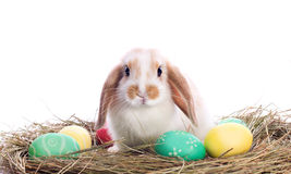 Cute little rabbit with easter eggs. In velour grasses isolated on white Royalty Free Stock Photo