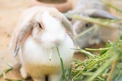 Cute little rabbit eating fresh grass Stock Images