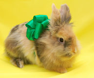 Cute little rabbit with green bow. On yellow background Royalty Free Stock Images