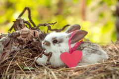 Cute little rabbit with heart. Of pink paper with ribbon on ear and exposed roots on hay on natural background Royalty Free Stock Photography