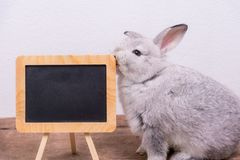 The cute of Rabbit and blackboard royalty free stock photos