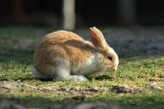 Cute Little Rabbit. Sits on a green meadow with shallow depth of field Royalty Free Stock Image