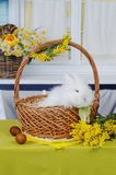Cute baby bunniy sitting in a wooden basket on the table with flowers royalty free stock photography