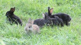 Cute little rabbits eating green grass stock video