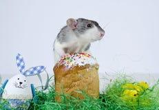 Cute little rat. Stock Photos
