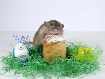 Cute little rat. Royalty Free Stock Photos