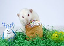 Cute little rat. Cute little decorative rat near the Easter cake Stock Photography
