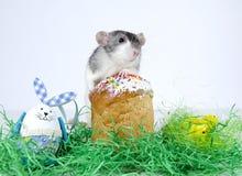 Cute little rat. Stock Images