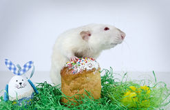 Cute little rat. Royalty Free Stock Image