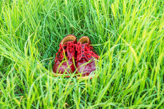 Cute little red baby shoes in green grass. Close up pair of small leather children`s shoes in vivid grass Royalty Free Stock Images