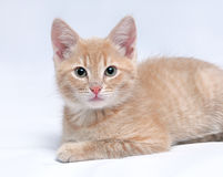 Cute little red kitten looking at the camera Stock Photography