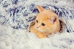 Cute little red kitten Stock Photos