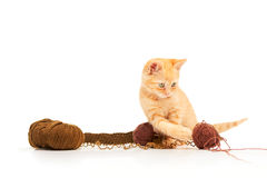 Cute little red kitten playing with balls of yarn Royalty Free Stock Images