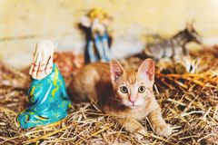Cute little red kitten playing in old church. Between figurines of Jesus and Mary Stock Image