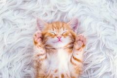 Cute little red kitten sleeps on fur. White blanket royalty free stock images