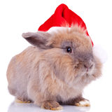 Cute little santa bunny Stock Image