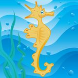 Cute little seahorse. In the sea Royalty Free Stock Photo