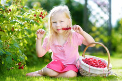 Cute little sisters picking fresh berries on organic raspberry farm on sunny summer day Stock Photography