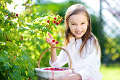 Cute little sisters picking fresh berries on organic raspberry farm on sunny summer day Stock Photos