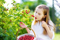 Cute little sisters picking fresh berries on organic raspberry farm on sunny summer day Stock Image