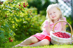 Cute little sisters picking fresh berries on organic raspberry farm on sunny summer day Stock Photo