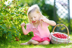 Cute little sisters picking fresh berries on organic raspberry farm on sunny summer day. Cute little girl picking fresh berries on organic raspberry farm on warm Royalty Free Stock Photography