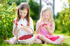 Cute little sisters picking fresh berries on organic raspberry farm on sunny summer day Stock Images