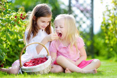 Cute little sisters picking fresh berries on organic raspberry farm Stock Photos