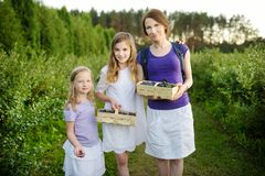 Cute little sisters and their mom picking fresh berries on organic blueberry farm on warm and sunny summer day. Fresh healthy stock image
