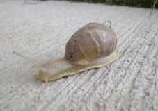 Cute little snail Stock Photos