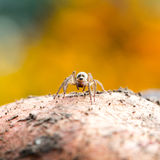 Cute little spider Stock Photography
