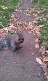 Cute little squirrel chewing her meal royalty free stock photography