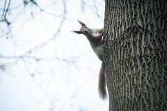 Cute little squirrel sitting on tree stock photo