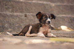 Cute little street dog. A cute little mixed breed street dog lying in front of steps in Sri Lanka royalty free stock images