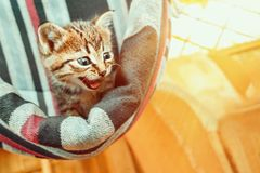 A cute little tabby kitten sits in a hammock in a summerhouse stock image